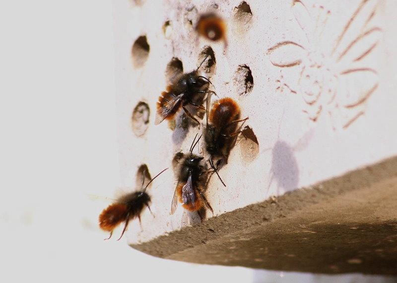 woher lehm für insektenhotel
