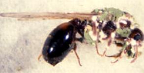 gelbe motten larven im holz
