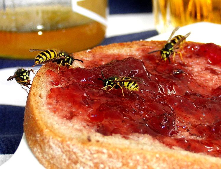 Materialien Die Wespen Vertreiben