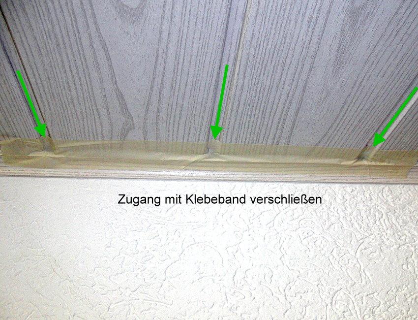 Wespen In Der Wohnung Massnahmen